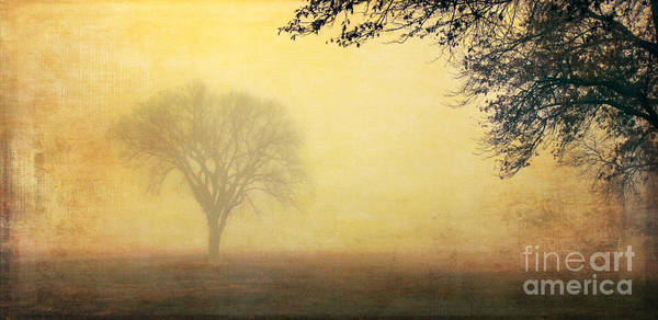 Photograph - Foggy Morning by Pam  Holdsworth