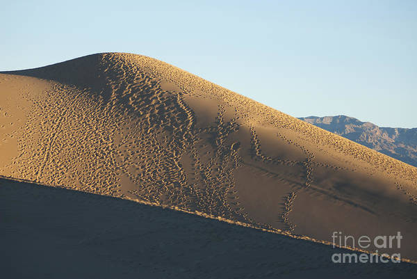 Photograph - Footprints On Sand Dunes by Dan Suzio