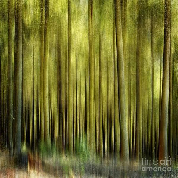 Treeline Photograph - Forest by Bernard Jaubert