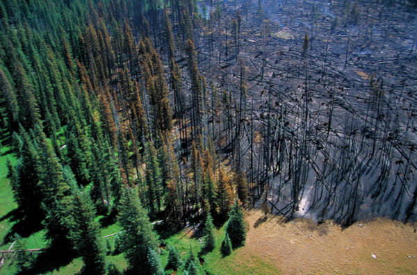 Wall Art - Photograph - Forest Fire Damage by Kari Greer/science Photo Library