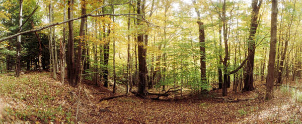 Catskill Photograph - Forest, Kaaterskill Falls Area by Panoramic Images