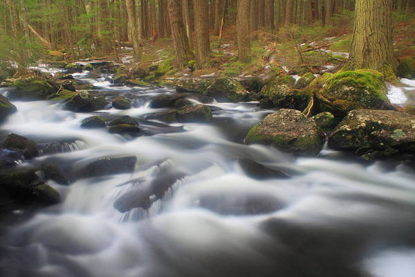 Rutland Photograph - Forest Stream In Spring by John Burk