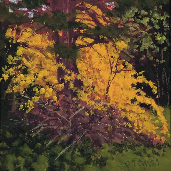Forsythia Painting - Forsythia And Pine - Art By Bill Tomsa by Bill Tomsa