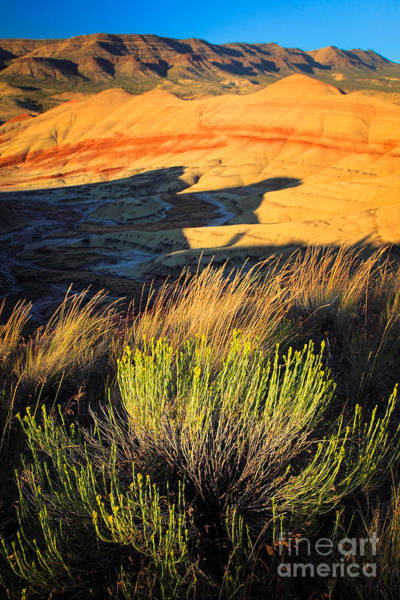 Painted Desert Photograph - Fossil Beds And Grass by Inge Johnsson