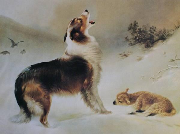 Wildlife Digital Art - Found by Albrecht Schenck