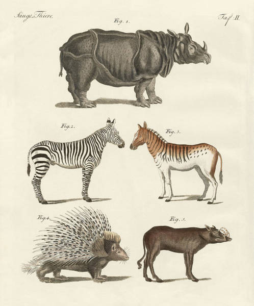 Wall Art - Drawing - Four-footed Animals by Friedrich Justin Bertuch