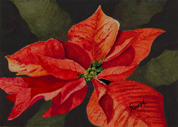 Painting - Franci's Poinsettia by Sam Sidders