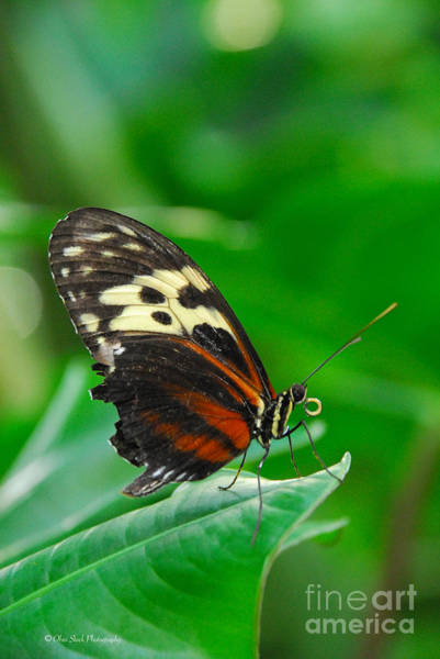 D5l15 Butterfly At Franklin Park Conservatory Art Print