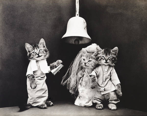 Photograph - Frees Kittens, C1914 by Granger