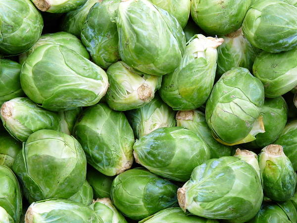 Photograph - Fresh Brussels Sprouts by Jeff Lowe
