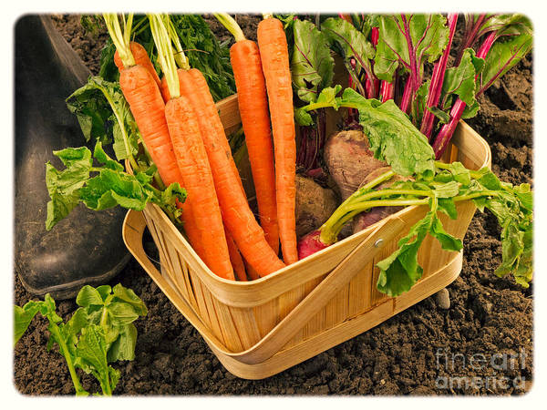 Photograph - Fresh Garden Vegetables by Edward Fielding