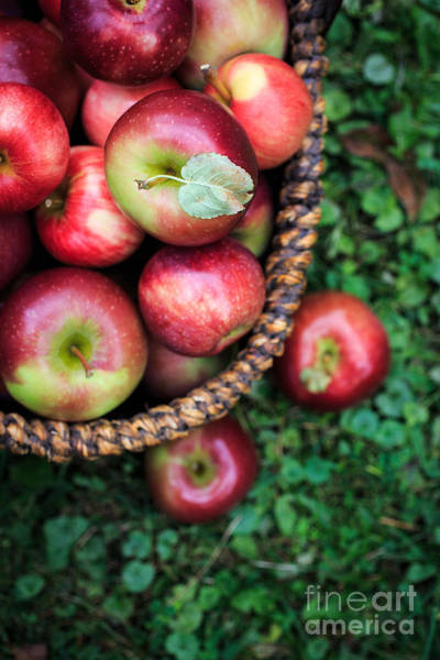 Photograph - Fresh Picked Apples by Edward Fielding