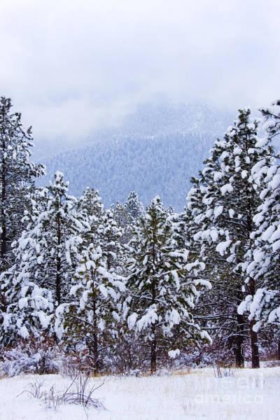 Photograph - Fresh Snow by Steve Krull