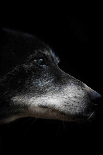 Wall Art - Photograph - From The New Pups To Retired Veterans by Rafal Gerszak