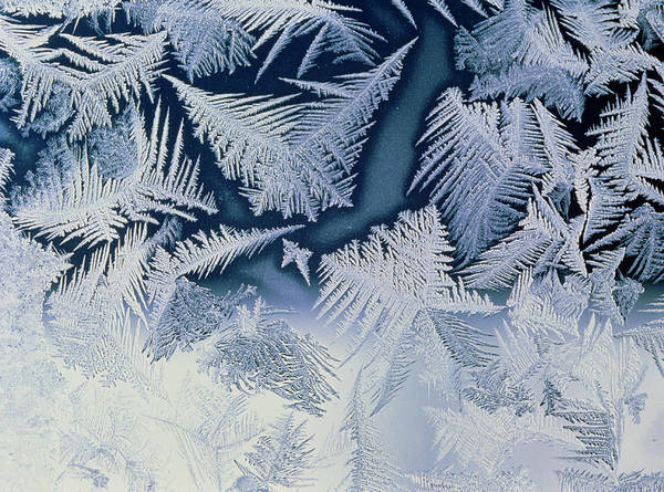 Fern Frost Photograph - Frost 'flowers' On Window by Pekka Parviainen/science Photo Library
