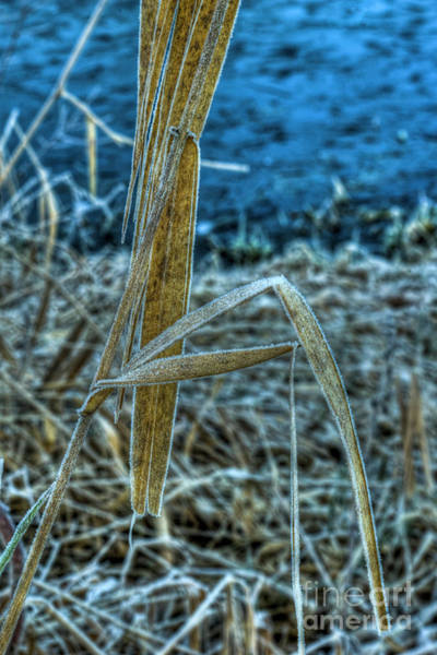 Mission Bc Photograph - Frost by Rod Wiens