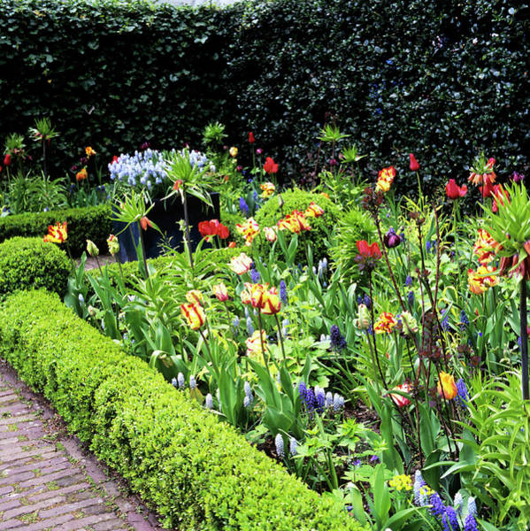 Wall Art - Photograph - Garden by Adrian Thomas/science Photo Library