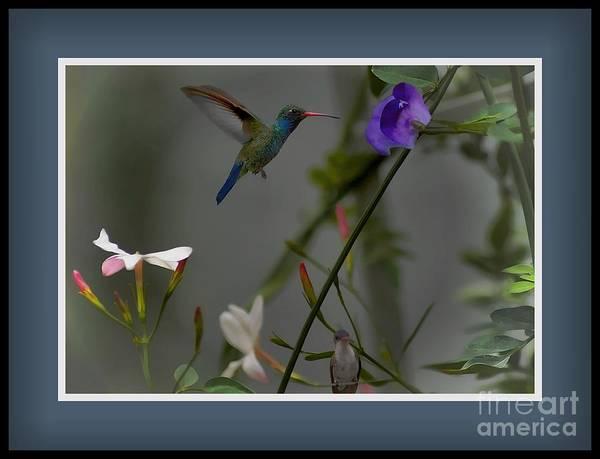 Photograph - Garden Scene by John  Kolenberg