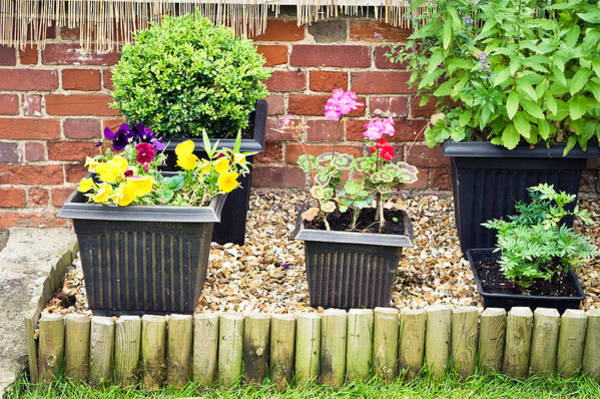 Trough Wall Art - Photograph - Garden by Tom Gowanlock