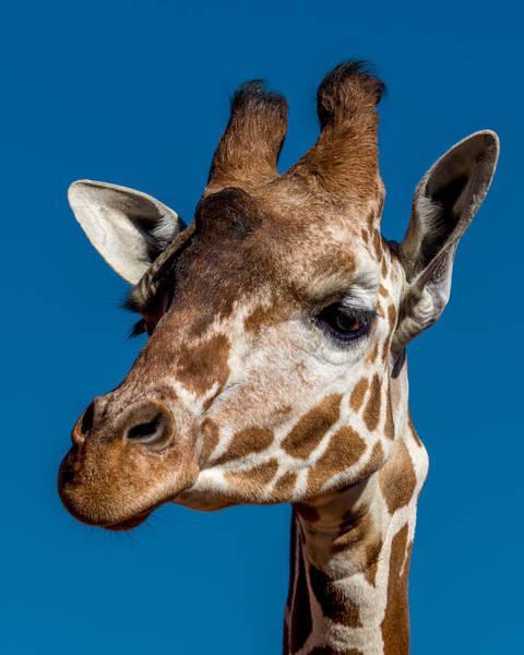 Giraffe Photograph - Giraffe by Ernie Echols
