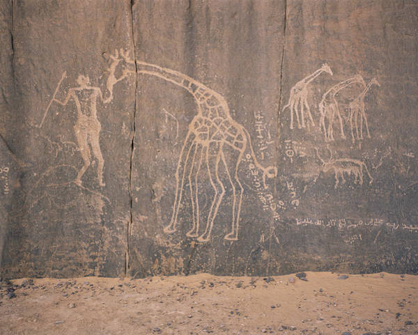 Petroglyph Photograph - Giraffe Petroglyph by David Parker/science Photo Library