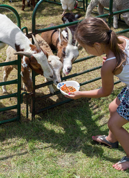 Petting Zoo Photograph - Girl Feeding Goats by Jim West