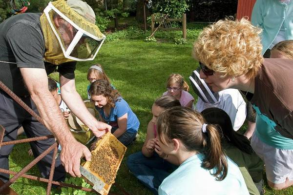 Royal Oak Photograph - Girl Scouts Learning About Honey Bees by Jim West