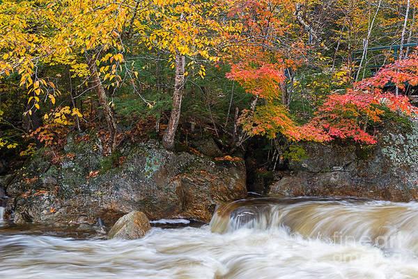 Photograph - Glen Ellis River by Sharon Seaward