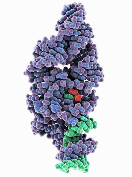 Glms Ribozyme Molecule Art Print