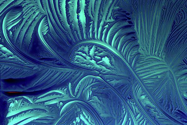 Neurotransmitter Wall Art - Photograph - Glycine Crystals by Marek Mis
