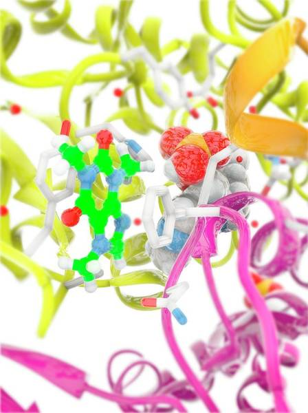Quaternary Photograph - Glycogen Phosphorylase Active Site by Ramon Andrade 3dciencia