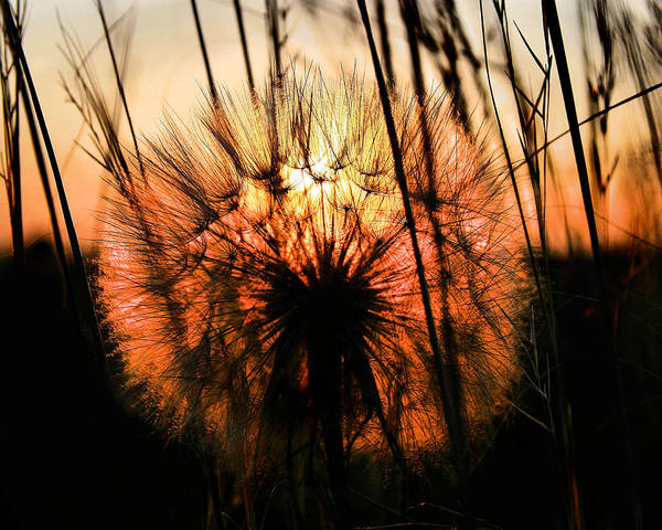 Wall Art - Photograph - Going To Seed by Steven Reed