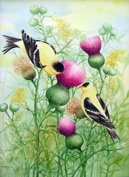 Gold Finches On Thistles Art Print