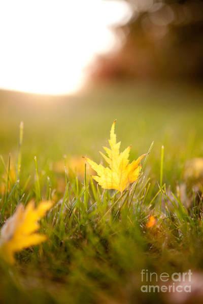 Photograph - Golden Autumn by Cindy Singleton