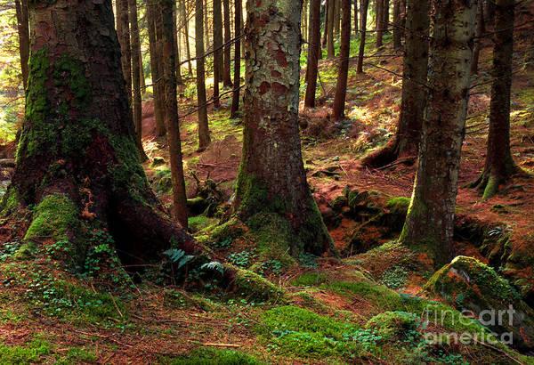 Photograph - Gortin Glen Forest Park by Thomas R Fletcher