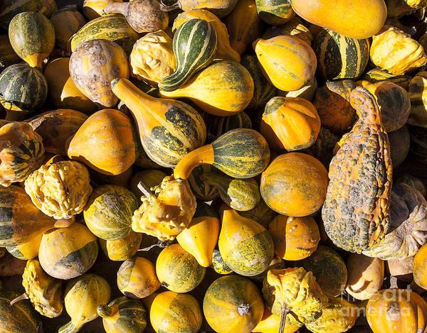 Photograph - Gourds by Steven Ralser