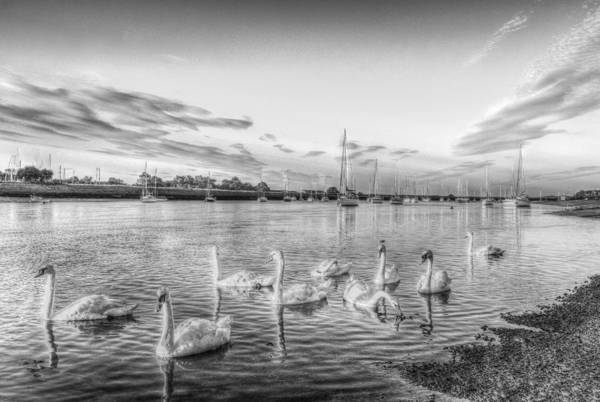 Swan Boats Photograph - Graceful Swans by David Pyatt