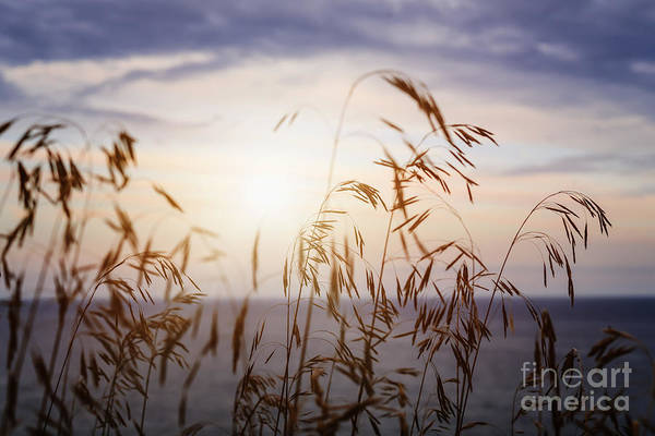 Wall Art - Photograph - Grass At Sunset by Elena Elisseeva