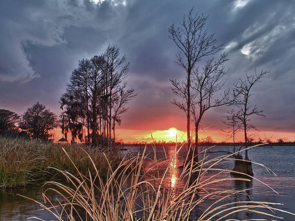 Photograph - Grassy View Sunset by Mike Covington
