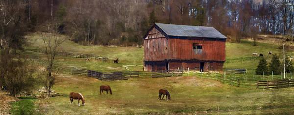 Barnyard Photograph - Grazing by Kathy Jennings