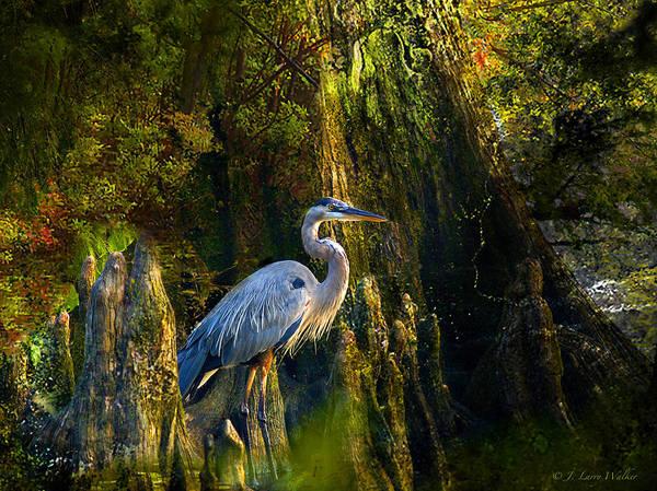 Cypress Digital Art - Great Blue Heron Slowly Strolling by J Larry Walker