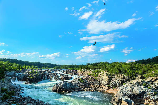Bird In Tree Photograph - Great Falls Of The Potomac by Drnadig
