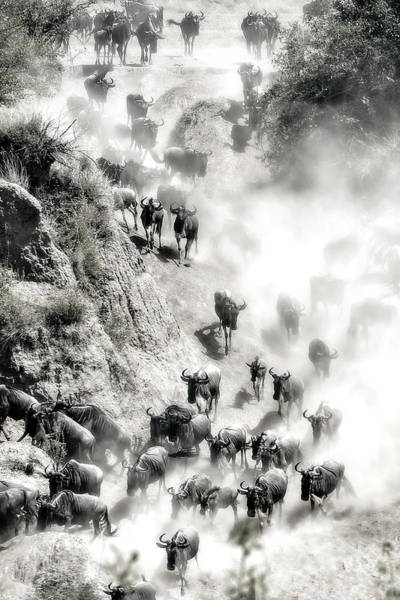 Wall Art - Photograph - Great Migration by Hua Zhu