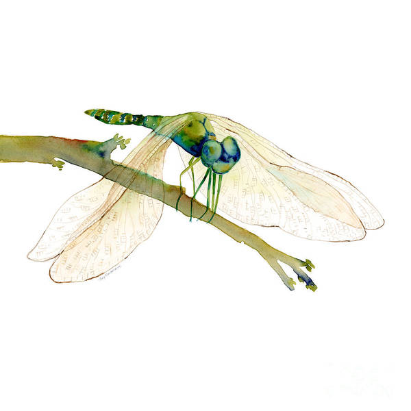 Painting - Green Dragonfly by Amy Kirkpatrick