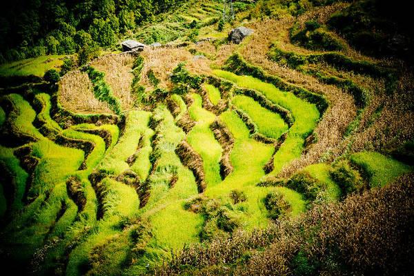 Wall Art - Photograph - Green Field In Nepal  by Raimond Klavins