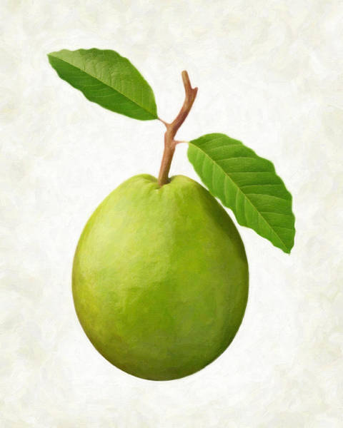 Wall Art - Painting - Guava by Danny Smythe