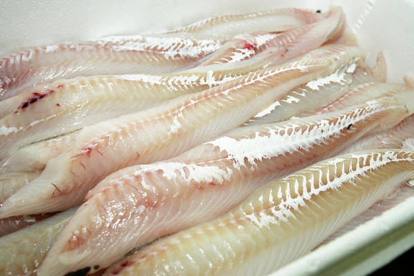 British Food Photograph - Haddock Fillets by Gustoimages/science Photo Library