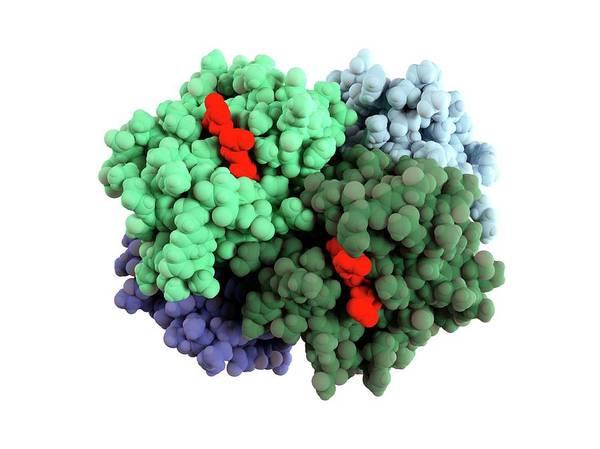 Haemoglobin Molecule Art Print