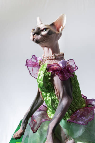 Wall Art - Photograph - Hairless Sphinx Cat Wearing Pearls by James White
