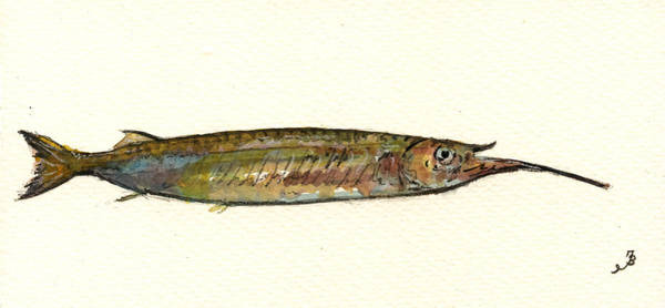 Bait Wall Art - Painting - Halfbeak Fish by Juan  Bosco